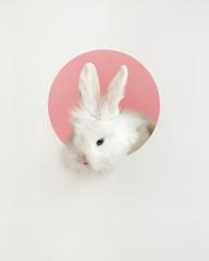 Cute rabbit in a hole