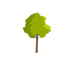 Hornbeam tree icon. Flat illustration of hornbeam tree vector icon isolated on white background