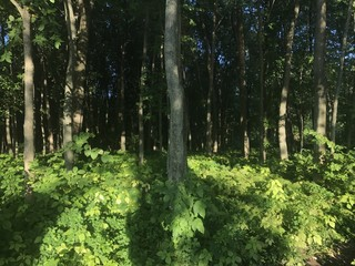 Bosque en Quebec