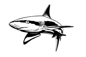 Graphical shark isolated on white background,vector illustration