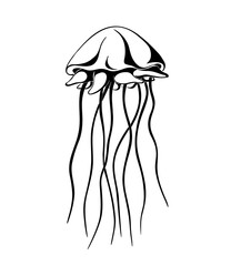 jellyfish, ink hand drawn vector illustration