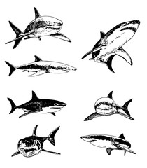 Graphical set of sharks isolated on white background,vector illustration