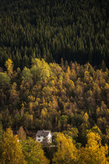 Lodge in a pine tree forest