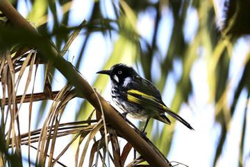 Bird Branch Sitting