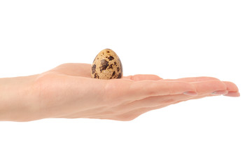 Quail egg isolated in hand