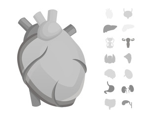 Cartoon human organs vector set . Anatomy of body. Reproductive system, heart, lungs, brain illustrations