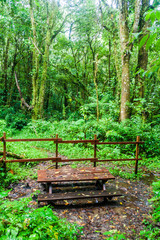 Rest area at the hiking trail Sendero Los Quetzales in National Park Volcan Baru during rainy season, Panama.
