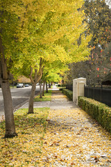 Autumn trees with sidewalk