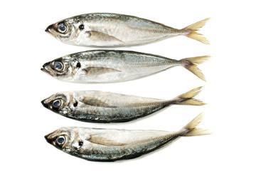 Raw short mackerel fish