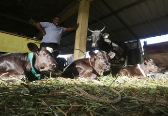 Farmer Ashbar Ali poses for a photograph with his cow Shiny and her recently born triplets, in Barackpore