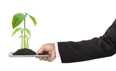 Businessman hand holding mobile phone and growing plant on top isolated on white background, concept of technology and environment