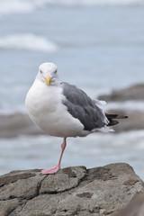 Seagull Looks 02