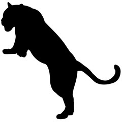 Leopard Silhouette Vector Graphics
