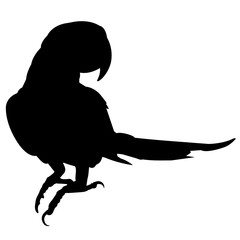 Macaw Silhouette Vector Graphics