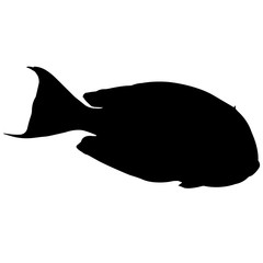 Parrotfish Silhouette Vector Graphics