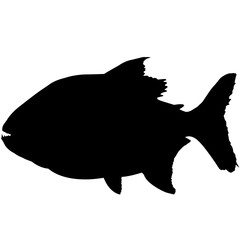 Piranha Silhouette Vector Graphics