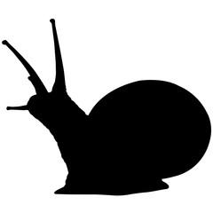 Sea snail Silhouette Vector Graphics