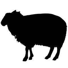 Sheep Silhouette Vector Graphics