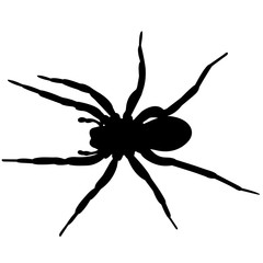 Spider Silhouette Vector Graphics