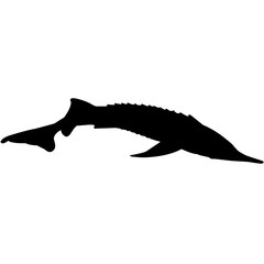 Sturgeon Silhouette Vector Graphics