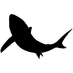 Tiger shark Silhouette Vector Graphics