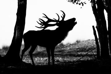 Deer - Cerf