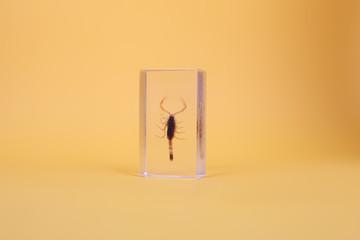 Scorpion in plastic