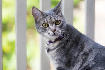 Grey striped cat on balcony. Grey tabby cat with green eyes sits outside.