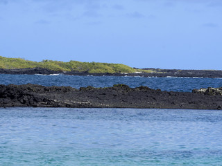 The southern island of Isabela is formed by black lava with mangrove stands, Glapagos, Ecuador