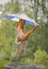 squirrel hanging under umbrella in rain