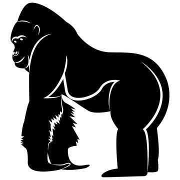 Vector image of a silhouette gorilla on a white background