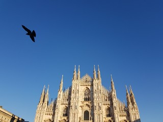 Un piccione a Milano