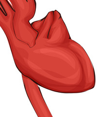 Medicine illustration, vector human heart in red color.
