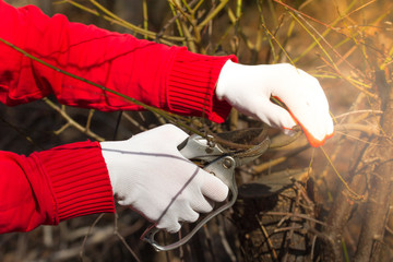 Man pruning tree brunch with pruning shears