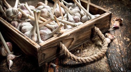 Garlic in a wooden tray.