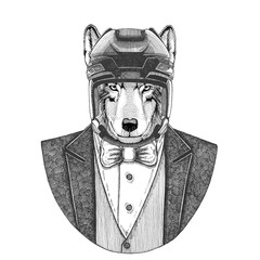 Wolf, Dog Animal wearing jacket with bow-tie and hockey helmet or aviatior helmet. Elegant hockey player. Image for tattoo, t-shirt, emblem, badge, logo, patch