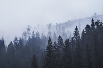 Misty landscape with mountains and fir forest in hipster vintage retro style