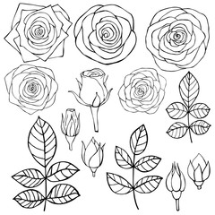Hand drawn flowers. Roses. Vector sketch  illustration.