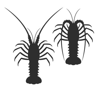 Spiny lobster silhouette. Isolated spiny lobster on white background