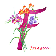 "Letter ""F"" with freesia, watercolor drawing on white background, isolated."