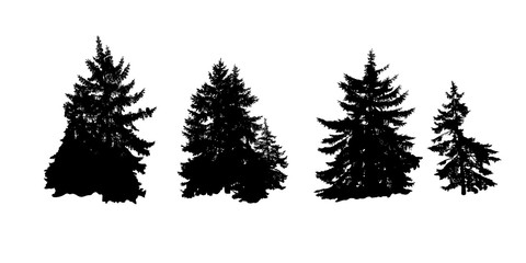 A realistic stencil of Christmas trees. Vegetable decor of the natural landscape .Vector illustration.