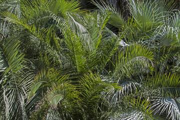 Hintergrund Palmblätter