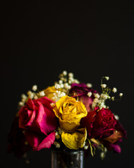 Dying Rose Bouquet on Black Background