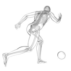 Skeletal illustration of football player playing football