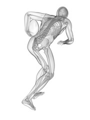 Rugby player's skeletal system, illustration