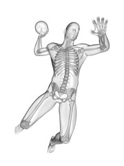Handball player's skeletal system, illustration