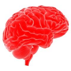 Illustration of human brain against white background