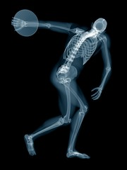 Discus thrower's skeletal system, illustration