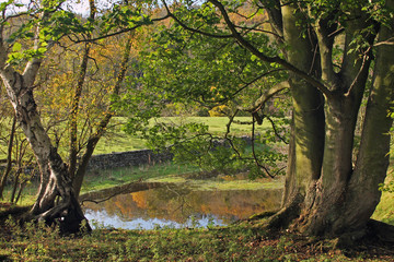 A North Yorkshire reflection, frame between two well aged Yorkshire trees, the reflection of the forest in the background can be seen in the pool of water at Esk Valley near Whitby.