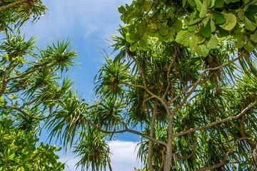 Palmen im Paradies